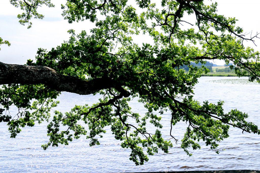 Baumstamm ragt in den Maisinger See