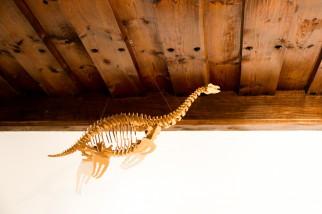 Dino Skelett in der Jugendherberge Eichstätt
